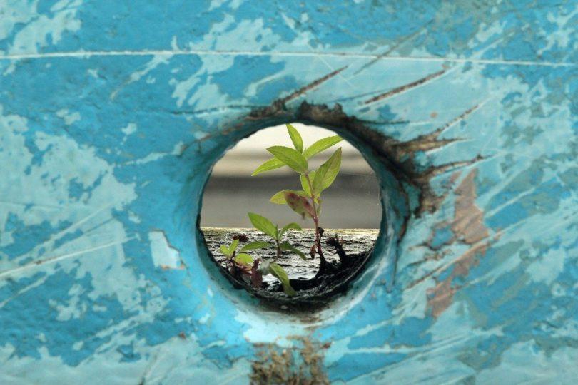 Planta nascendo de dentro do concreto