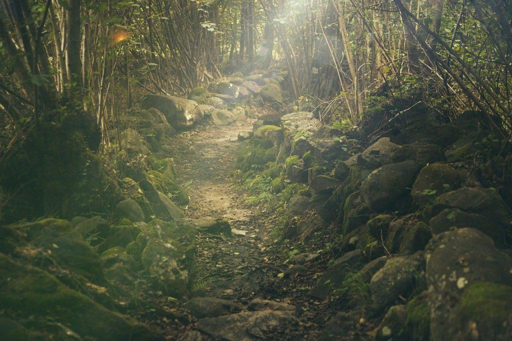 Imagem de uma floresta, com rochas que contornam um caminho