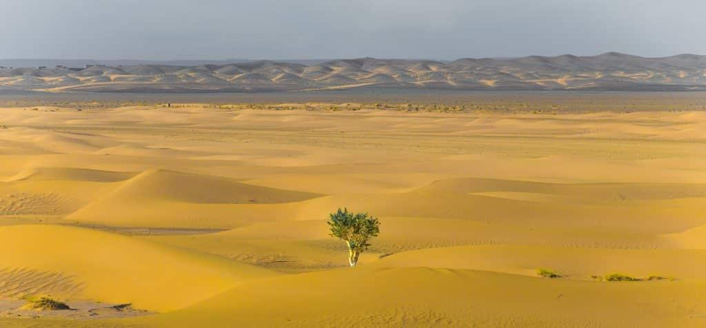 Uma árvore em meio ao deserto