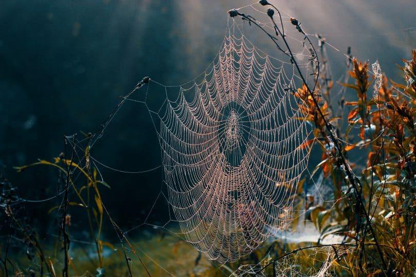 Teia de aranha e meio à natureza