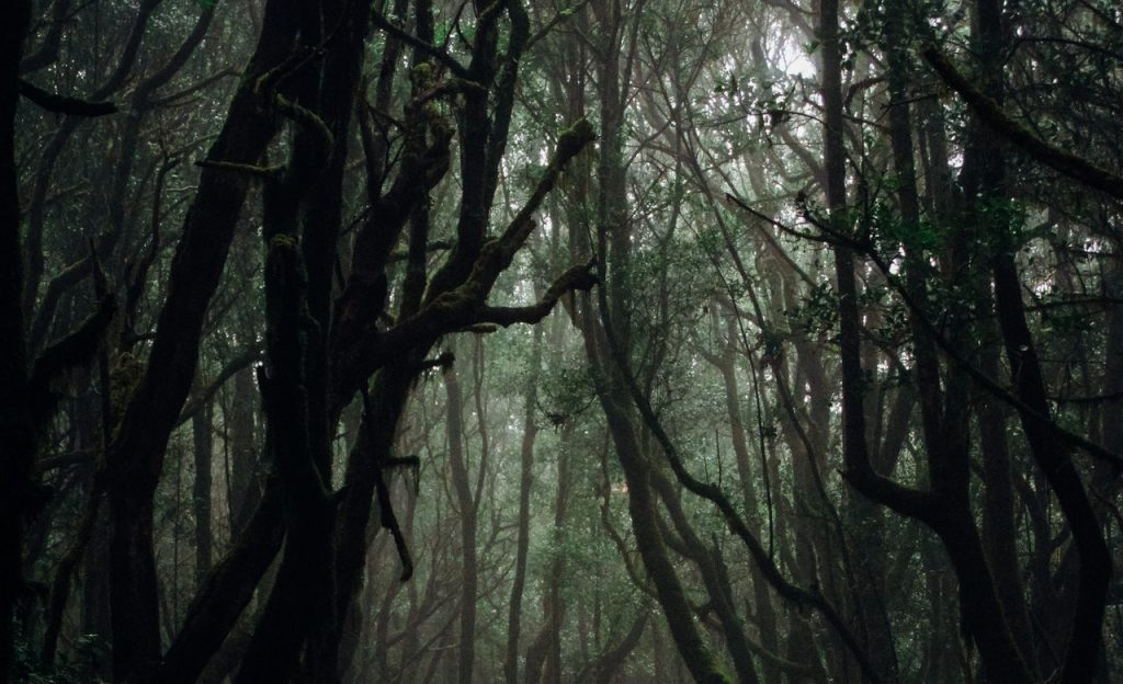 Floresta escura.