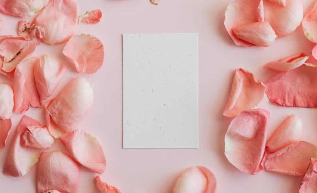 Pétalas de rosa em volta de folha branca.