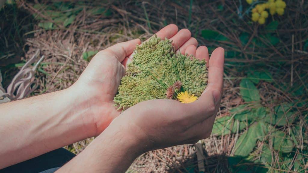 Mulher com grama nas mãos demonstrando conexão com a natureza