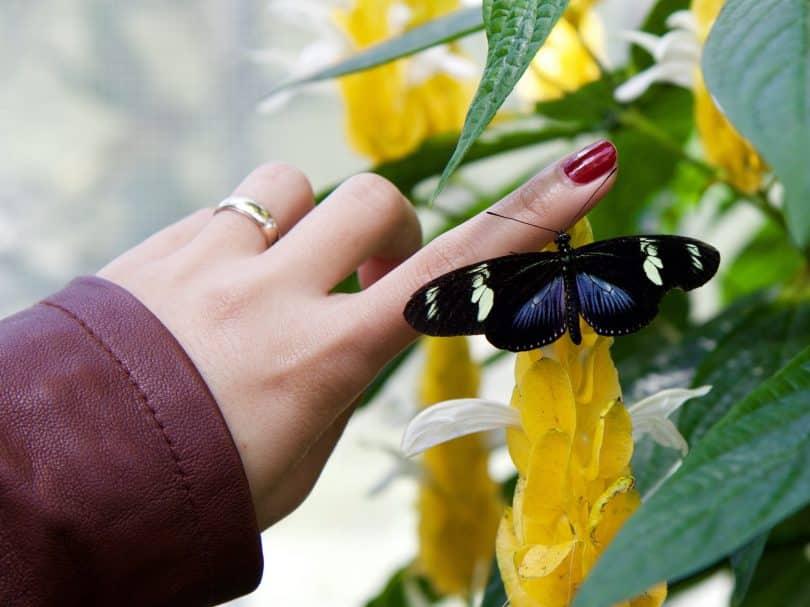 Uma borboleta pousando na mãos de uma mulher