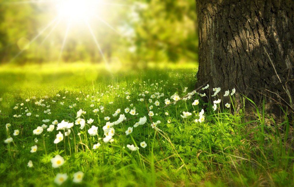 Campo com flores e forte luz do Sol