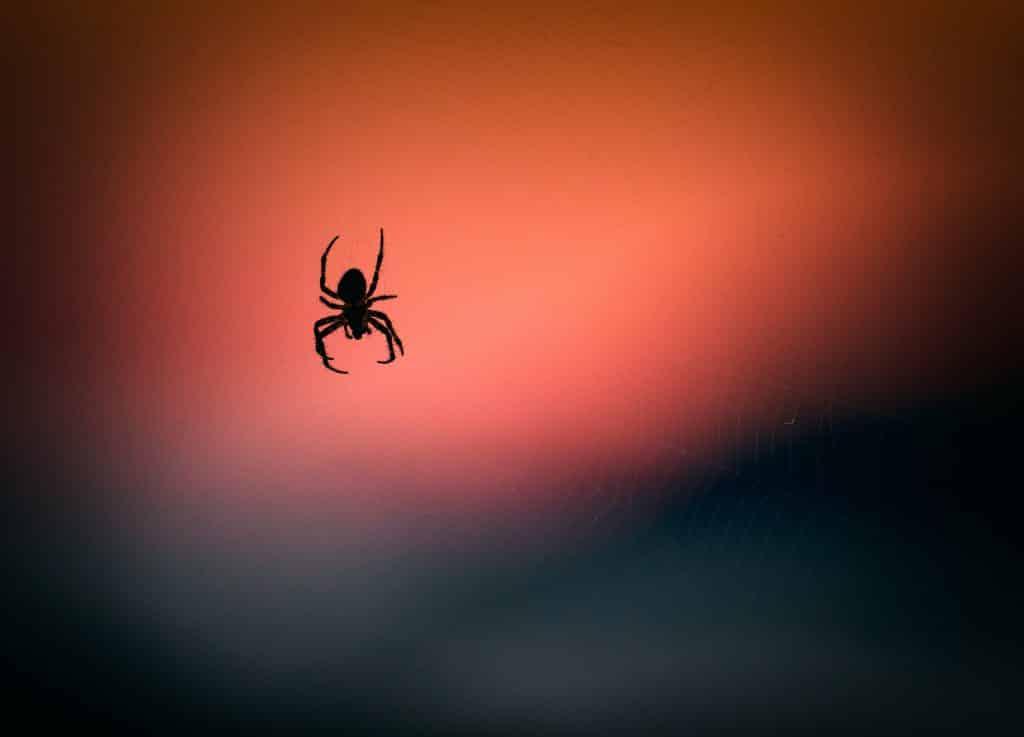 Pequena aranha pendurada em frente à luz do por do Sol