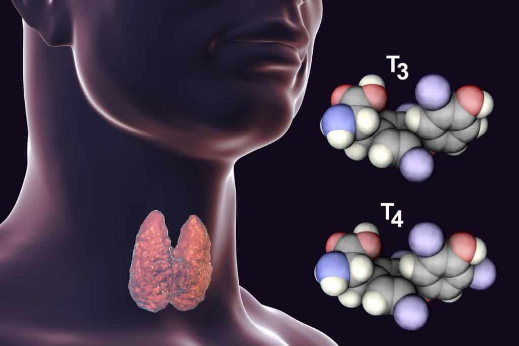 Moléculas dos hormônios tireoidianos T3 e T4