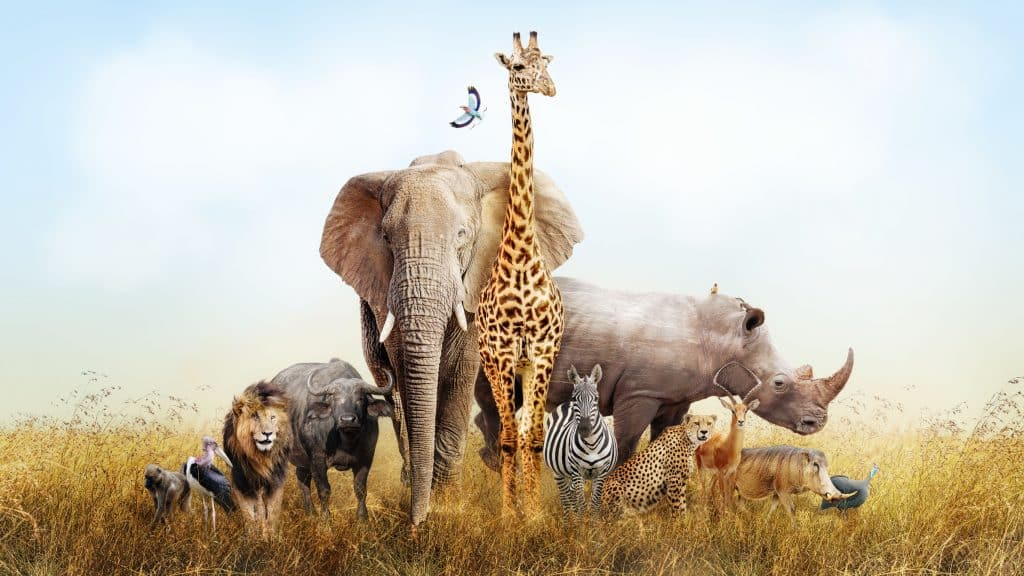 Grande grupo de animais de safári africanos reunidos em uma cena das pastagens do Quênia
