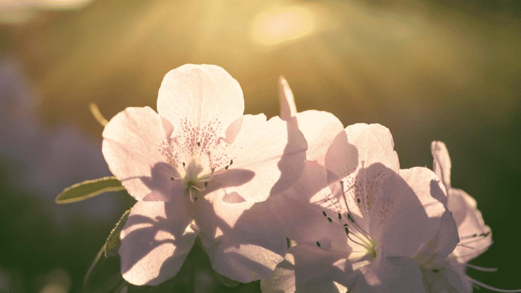 Flores expostas à luz solar