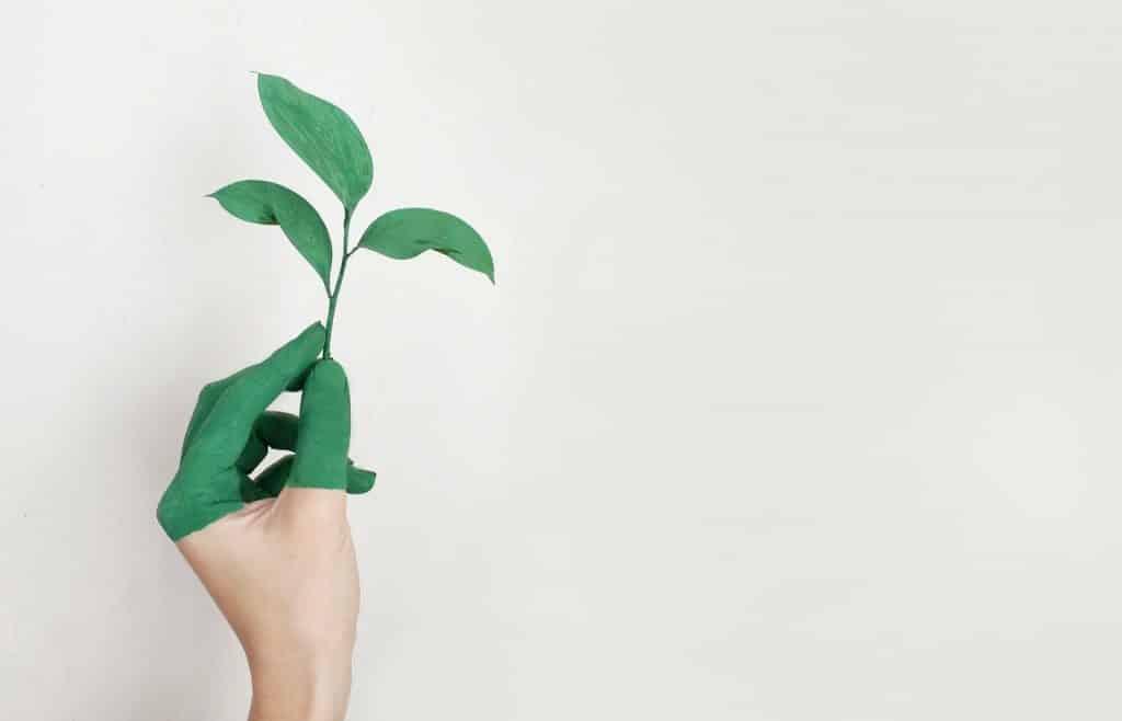 Mão branca segurando planta verde com os dedos pintados.