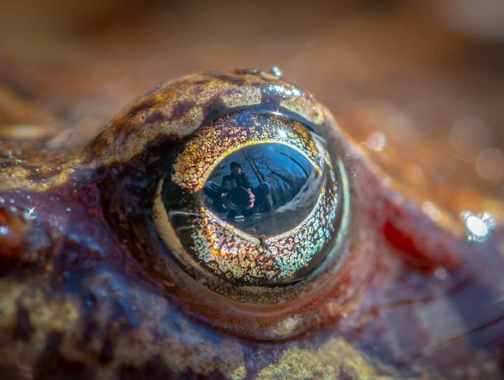 Foto aproximada do olho de um sapo