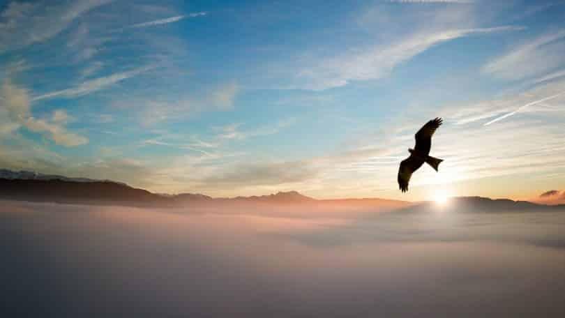 Silhueta de uma águia acima das Nuvens