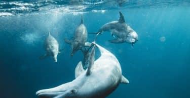 Grupo de golfinhos no mar