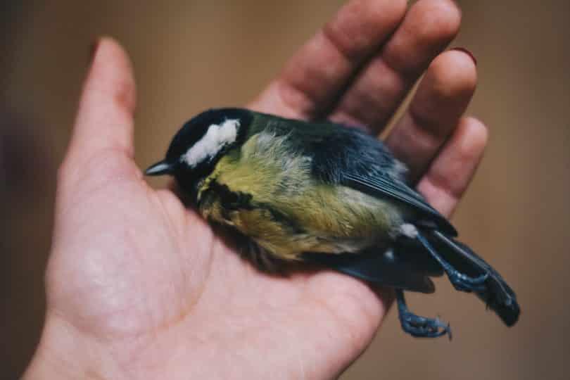 Mão com um passarinho morto