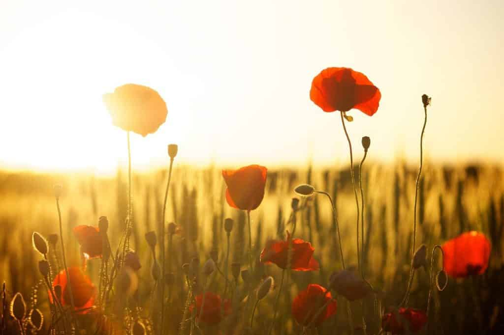 Campo florido recebendo a luz do Sol
