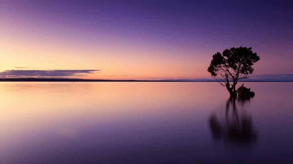 Vista do pôr do sol com uma árvore em meia à água
