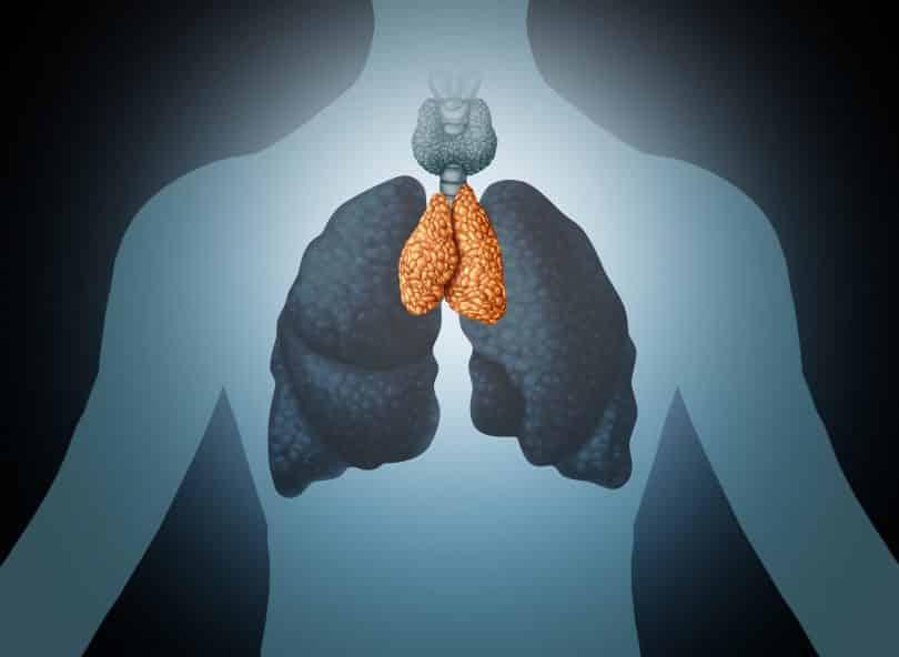 Órgão humano do timo e anatomia da glândula com pulmões e tireoide em um estilo de ilustração 3D.