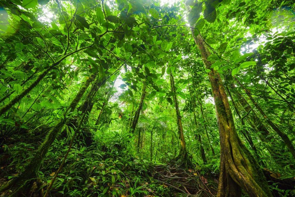 Árvores altas na selva