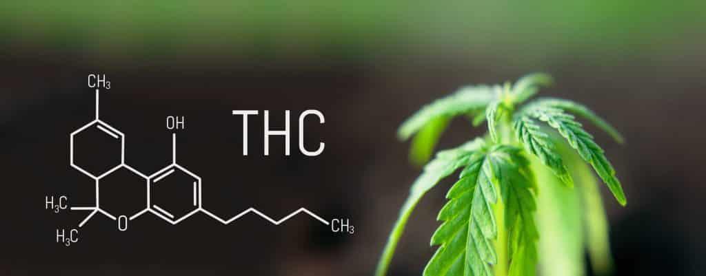 Folha de cannabis maconha e a fórmula química THC