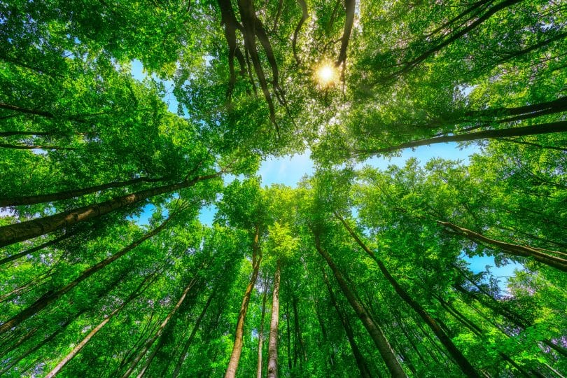 Foto de árvores.