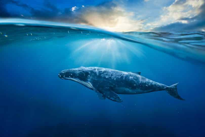Baleia nadando no fundo do oceano.