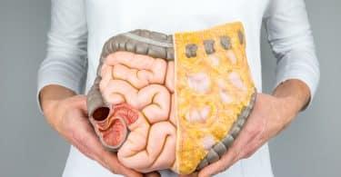 Mulher segurando um modelo de intestino humano na frente do corpo em fundo branco