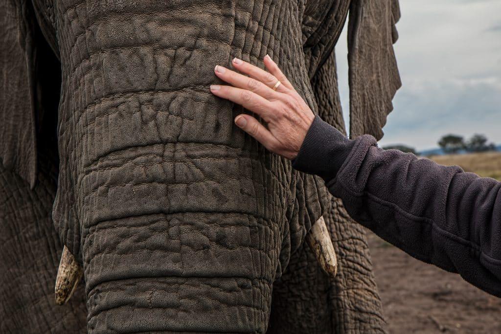 Pessoa encostando em um elefante