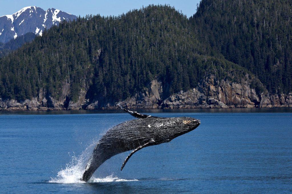 Baleia nadando em um oceano azul.