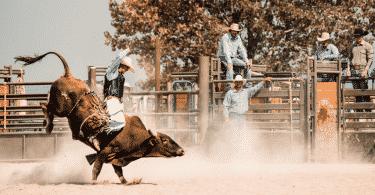 Show de rodeio com peão cavalgando no touro
