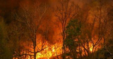 Desastre de incêndio em floresta tropical está queimando causado por humanos