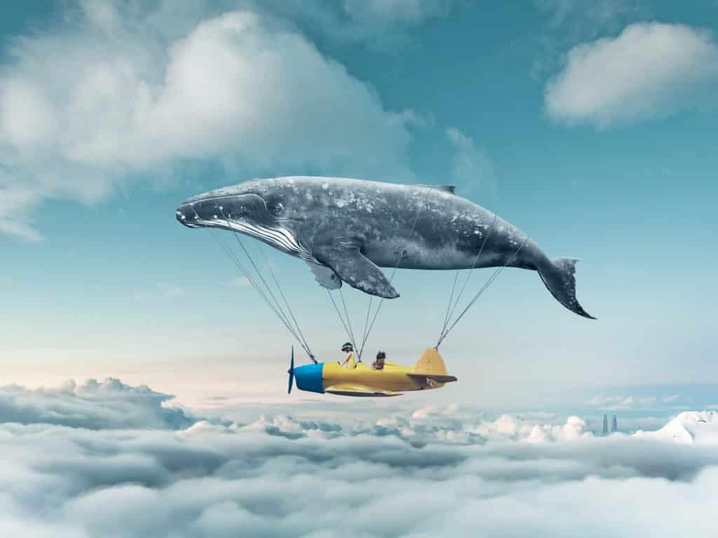 Baleia voando em cima de um avião - representação de um sonho