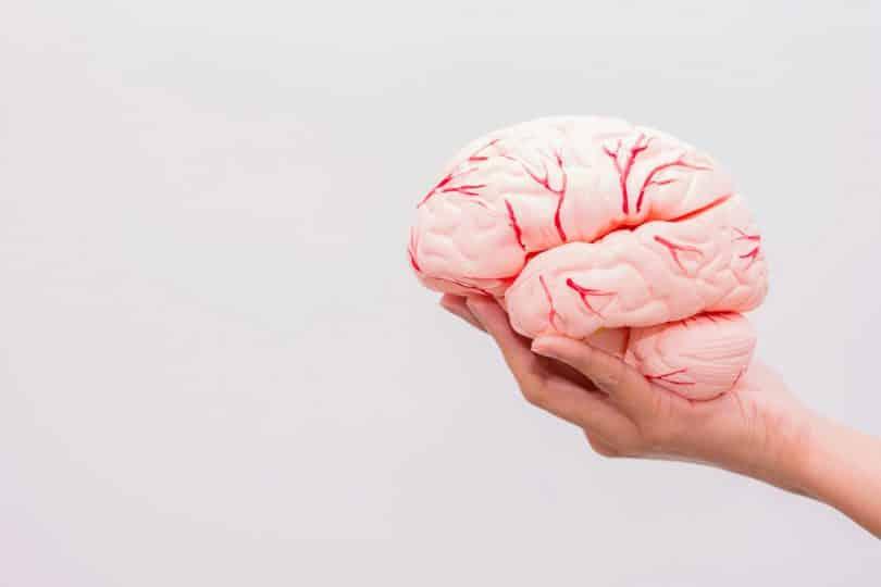 Uma pessoa segurando um cérebro de plástico