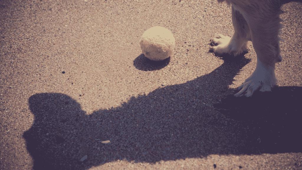 Imagem destacando sombra de um cachorro no chão. Na sua frente, uma bolinha de brinquedo
