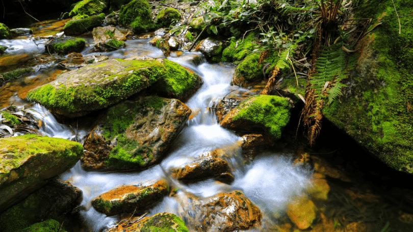 Pequeno córrego passando por pedras verdes, no meio da mata