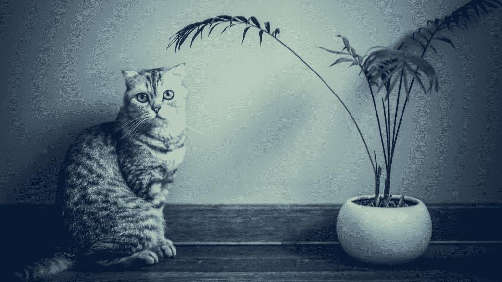 Imagem de um gato olhando para a câmera. Ao lado dele, uma planta em um vaso.