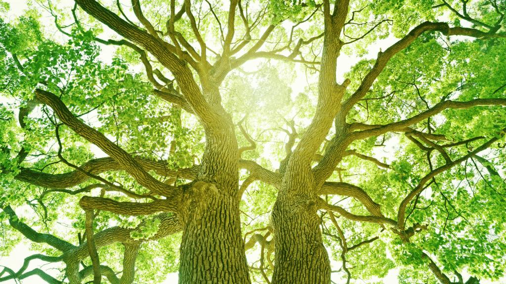 Foto da copa de uma árvore e luz do sol refletindo entre os galhos