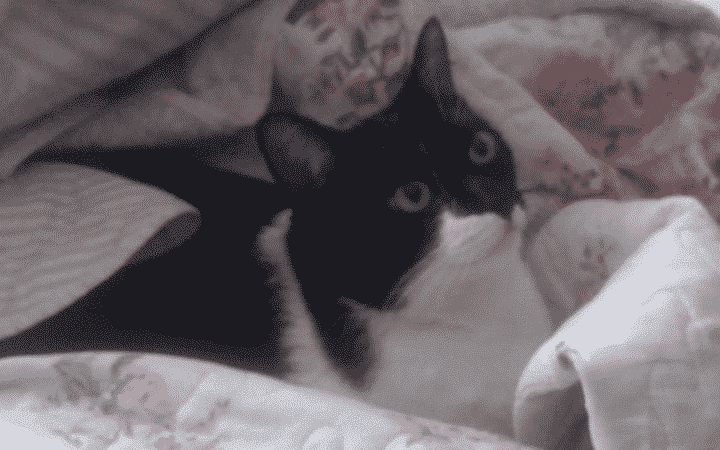 Gatinha deitada em cobertas.