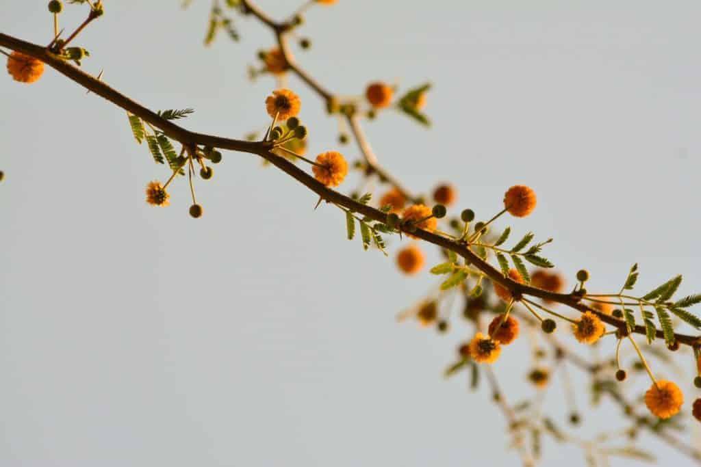 Pequenas flores amarelas num galho.