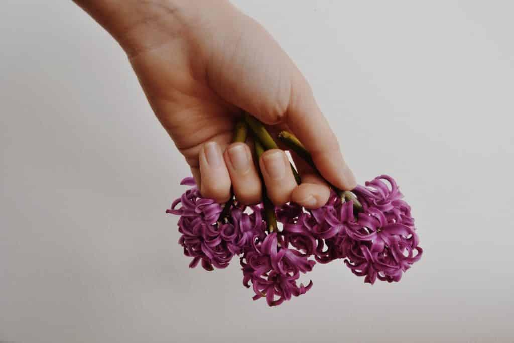 Mão branca segurando flor roxa.