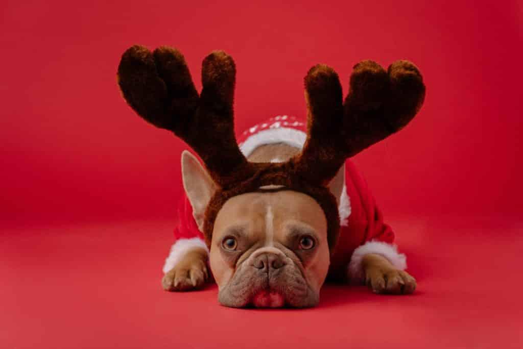 Cachorro com roupa de Natal.
