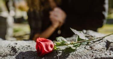 Uma rosa em cima de uma pedra
