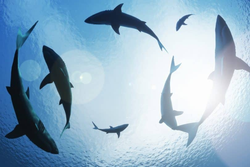 Tubarões nadando.