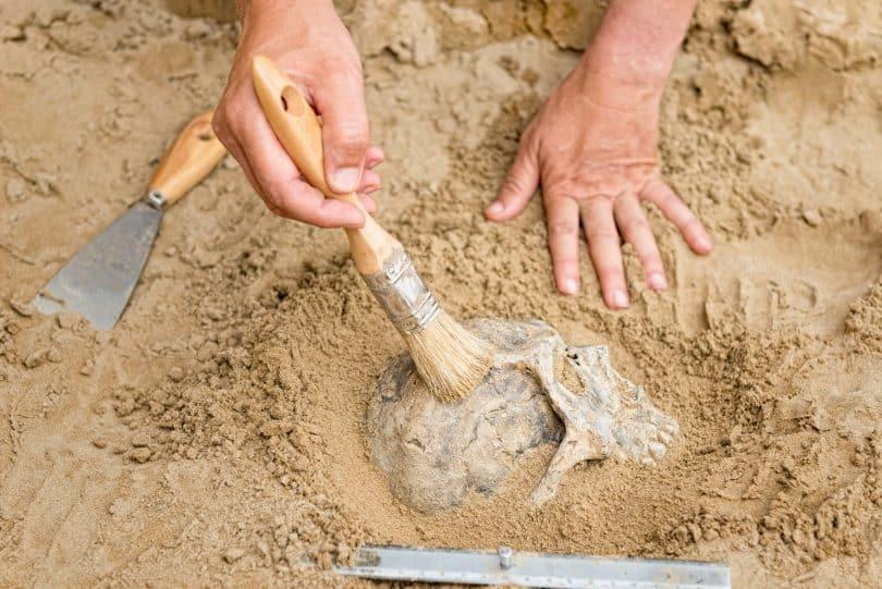 Pessoa limpando fóssil.