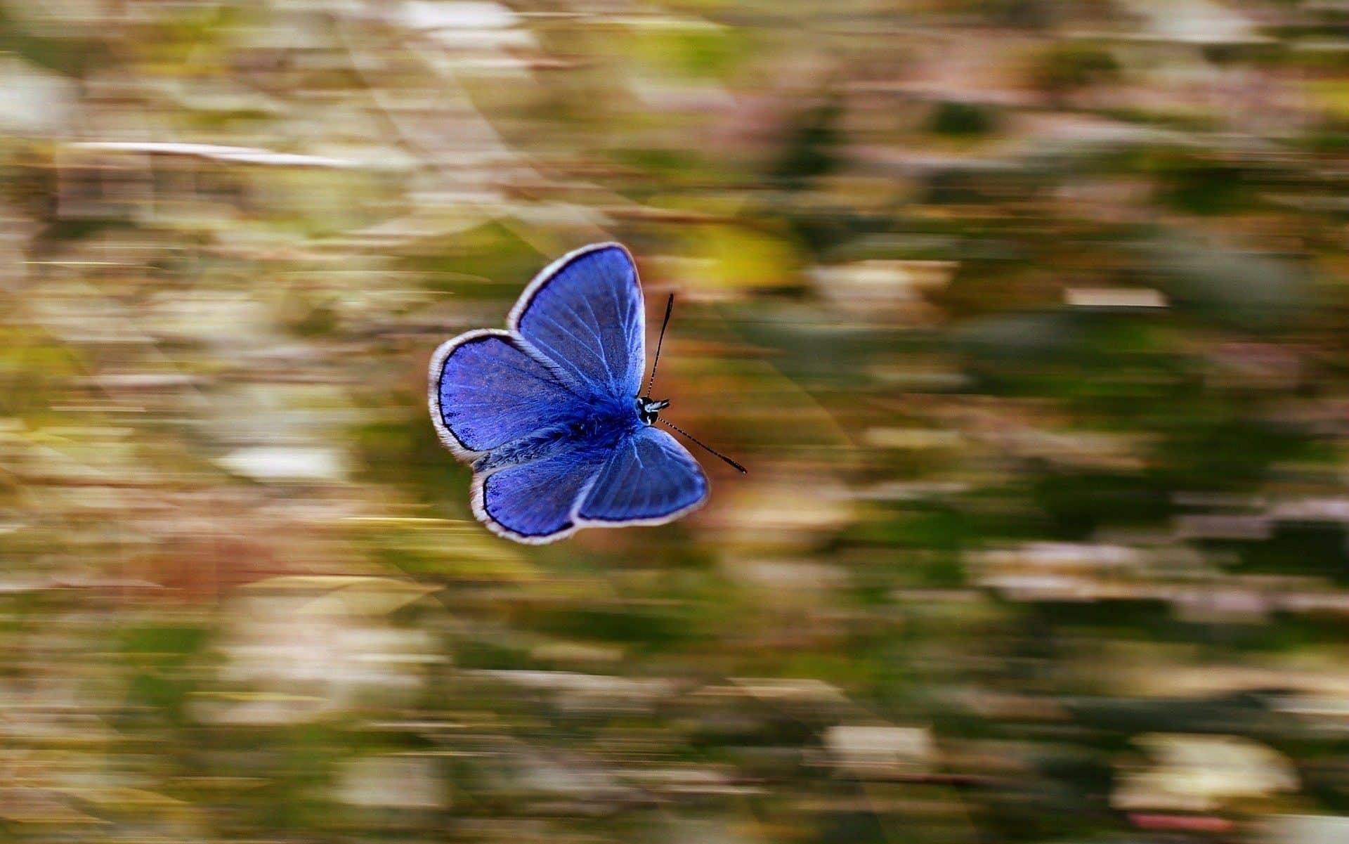 Uma borboleta-azul voando, com um fundo desfocado em movimento.