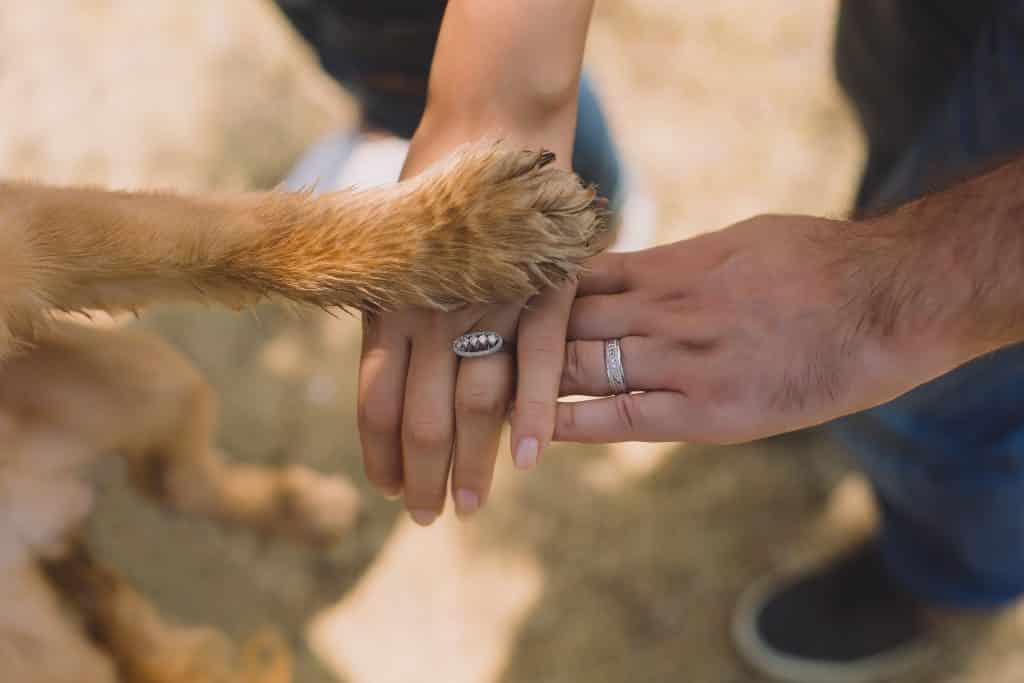 Um cachorro colocando sua pata sobre uma mão humana.