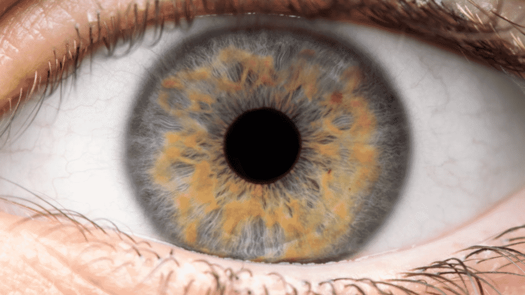 Imagem da íris de um olho humano
