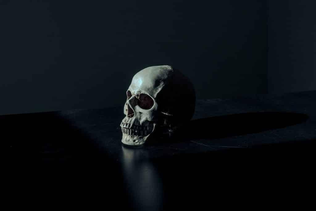 Um crânio disposto sobre um suporte escuro.