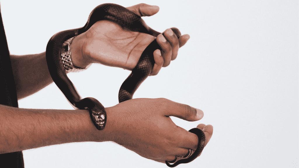 Duas mãos masculinas segurando uma cobra preta.