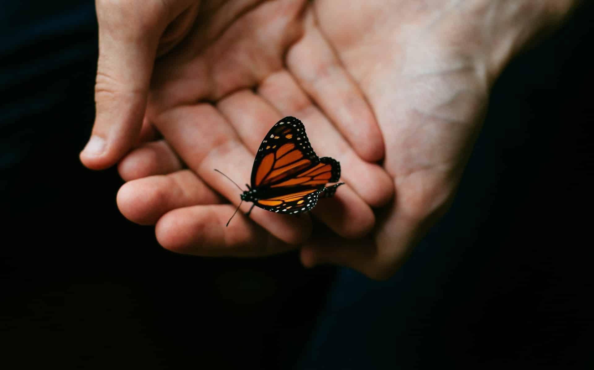 Uma pessoa, supostamente homem, erguendo as palmas das mãos. Sobre elas, uma borboleta.