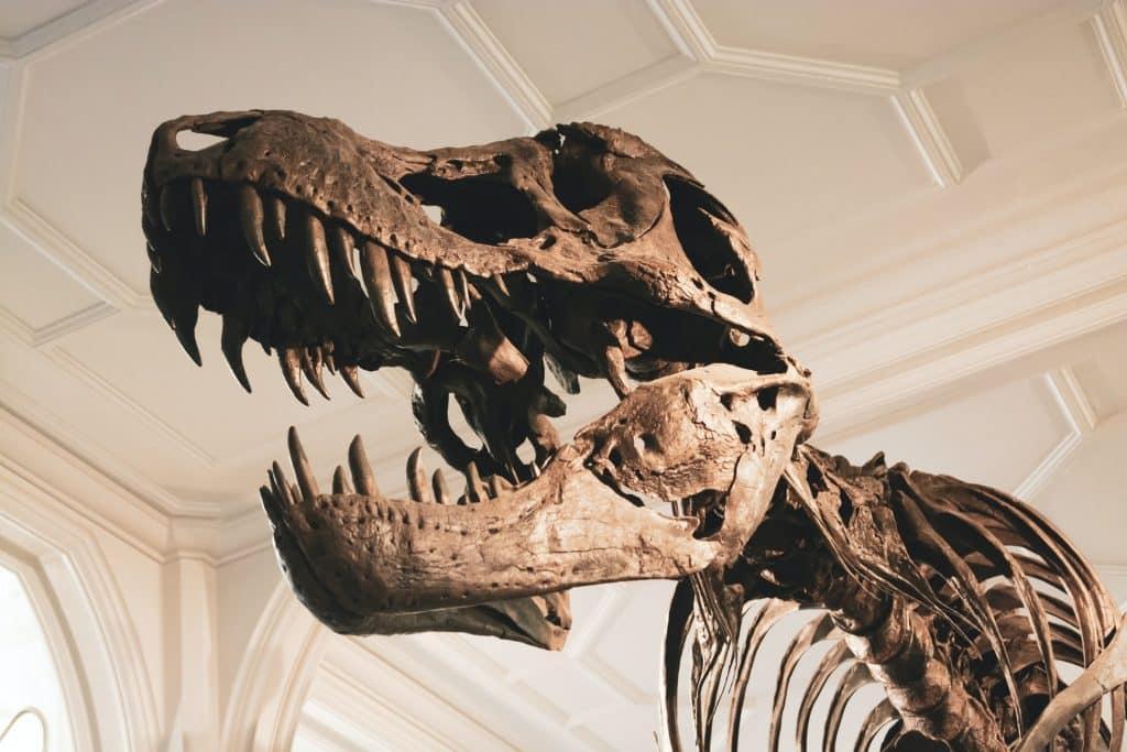 Fóssil de dinossauro.